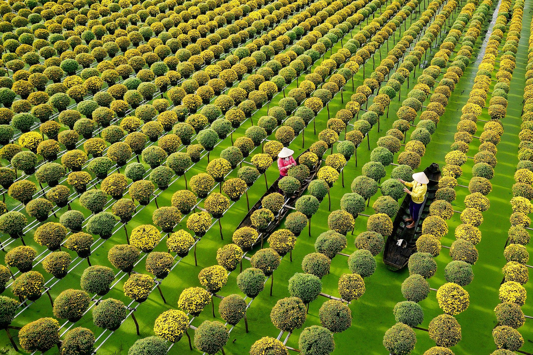 Làng Hoa Sa Đéc Đồng Tháp - Hướng dẫn du lịch Làng Hoa Sa Đéc