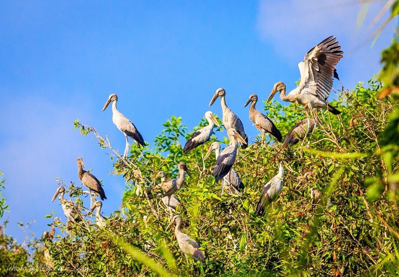 Khu bảo tồn thiên nhiên Lung Ngọc Hoàng - Hậu Giang